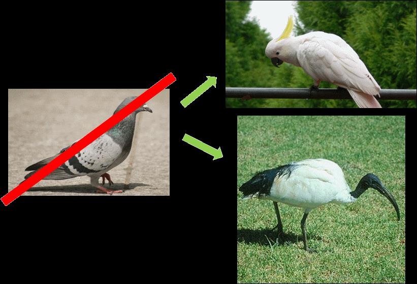 Pas de pigeon ici