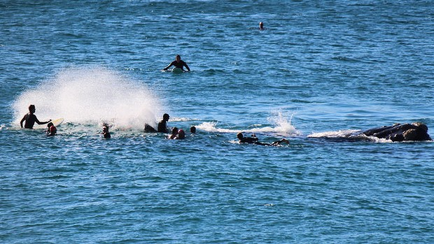 Baleine à Bondi